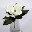 Magnolia 14 po