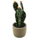 Cactus en pot 10H