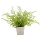 Plante Alpin