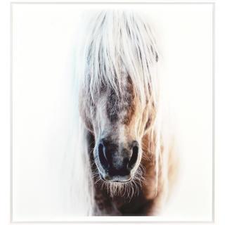 Cadre tête de cheval