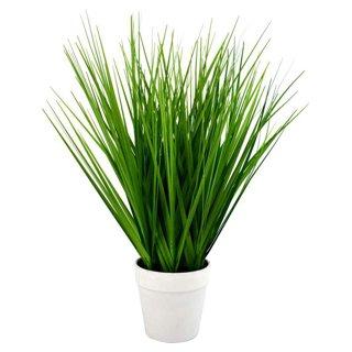Plante verte 15