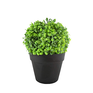 Plante 11