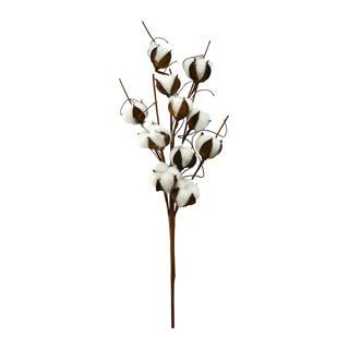 Fleur de coton 12 fleurs
